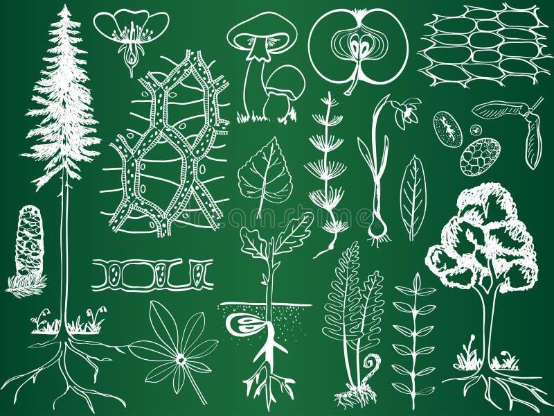 Biologiebetriebsskizzen auf Schulbehörde stock abbildung