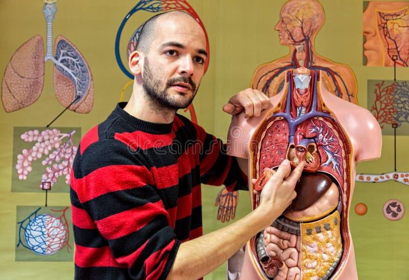 Biologieleraar die menselijk torsomodel tonen stock fotografie