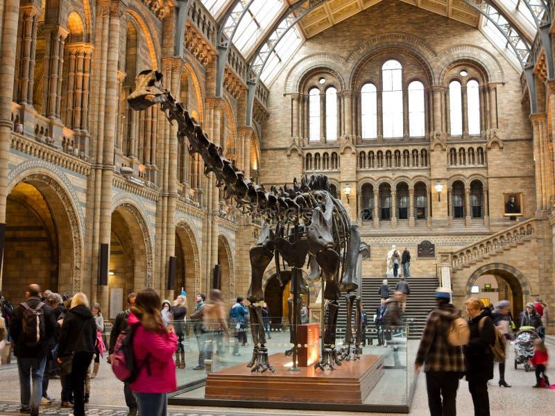 Biologiemuseum in Londen stock afbeeldingen