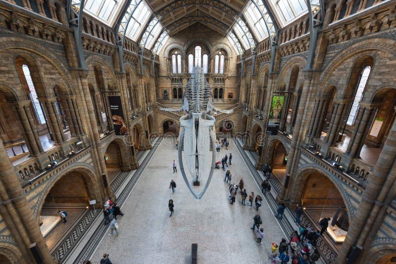 Biologiemuseum - Londen stock foto's