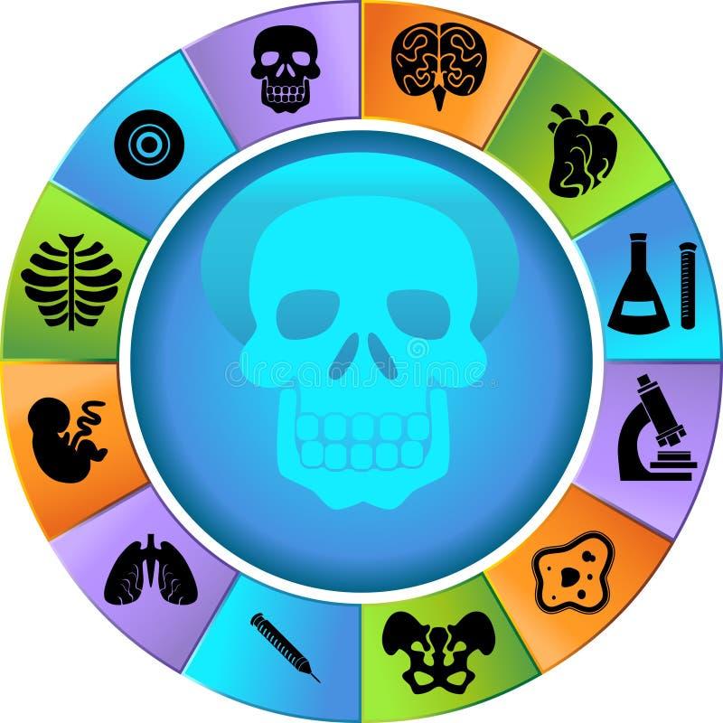 biologii koło ilustracja wektor