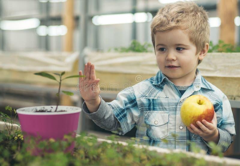 Biologikurs liten pojke på biologikursen i växthus biologikurs som lär för liten unge lycklig liten trädgårdsmästare arkivfoton