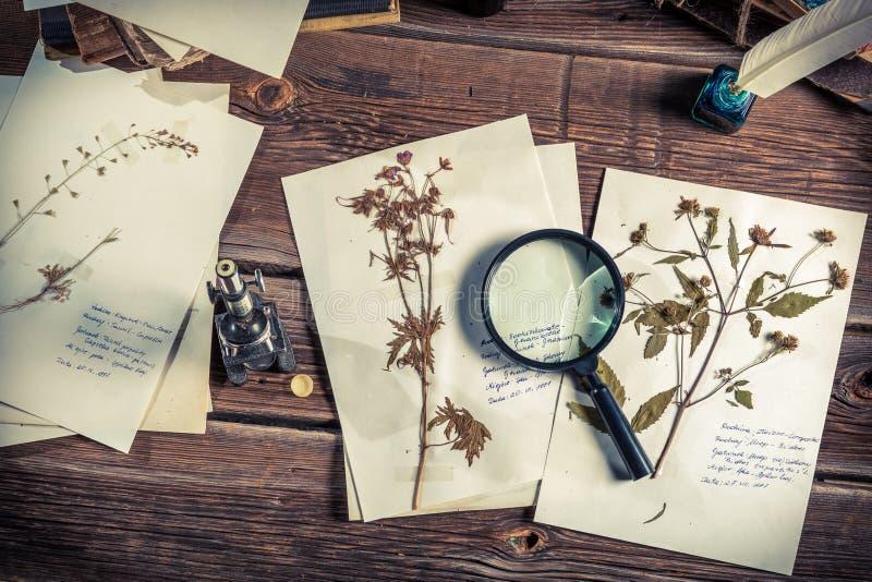Biologikurs och studie av strukturen av växter arkivfoto