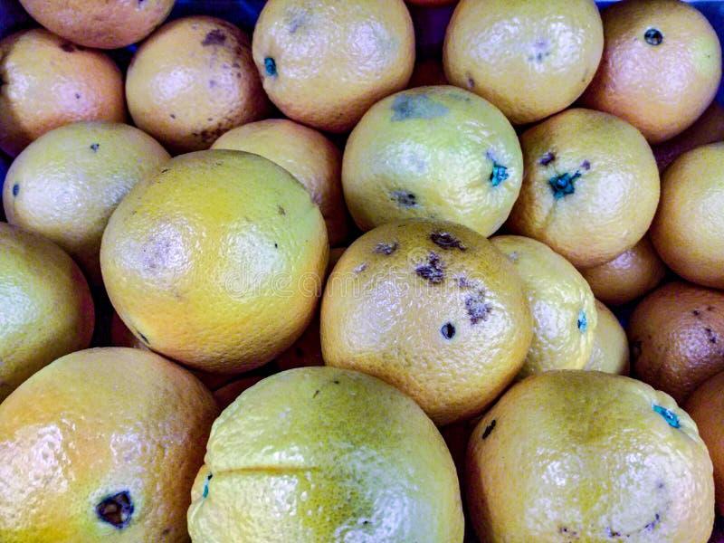 Biologique orange photo libre de droits