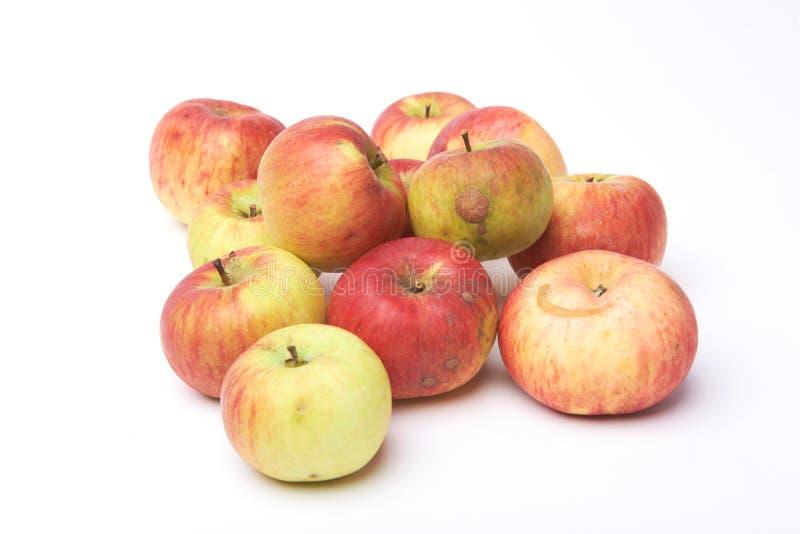 Biologische natuurlijke die appelen op witte achtergrond worden geïsoleerd Gegroeid zonder meststoffen en chemie royalty-vrije stock foto