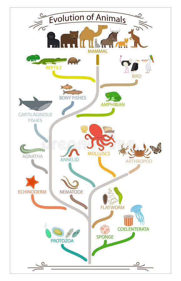 Biologisk evolutiondjurintrig stock illustrationer