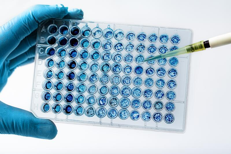 Biologist in lab holding a 96 well multi plate with biological samples for analysis royalty free stock images