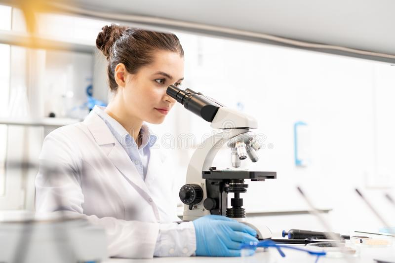 Biologist observing material at molecular level. Concentrated inquisitive young female biologist in lab coat sitting at table and using microscope while stock image