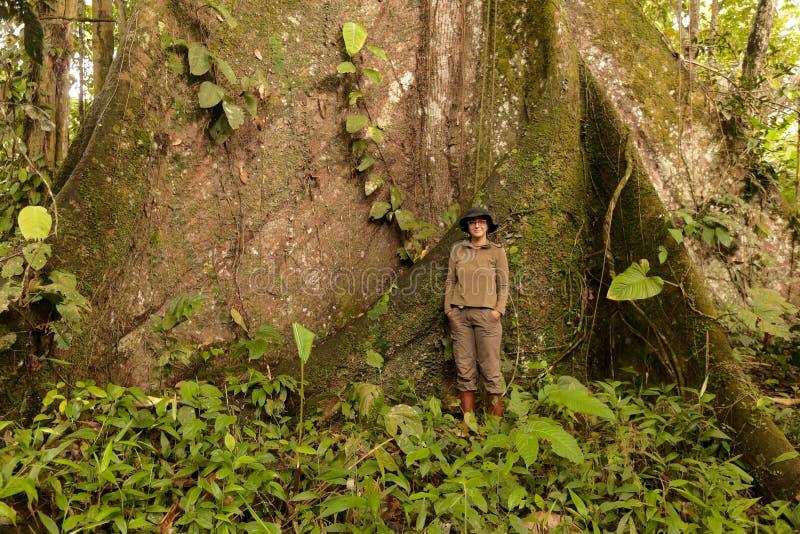Biologist Woman Nest To A Kapok Tree. Biologist Standing Next To A Kapok Tree Ceiba Pentandra In Ecuadorian Jungle Over 3 Meters In Diameter stock images