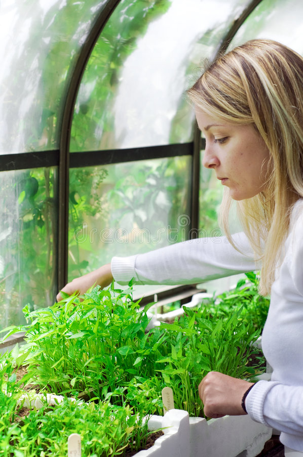 Biologist working in a greenhouse royalty free stock image
