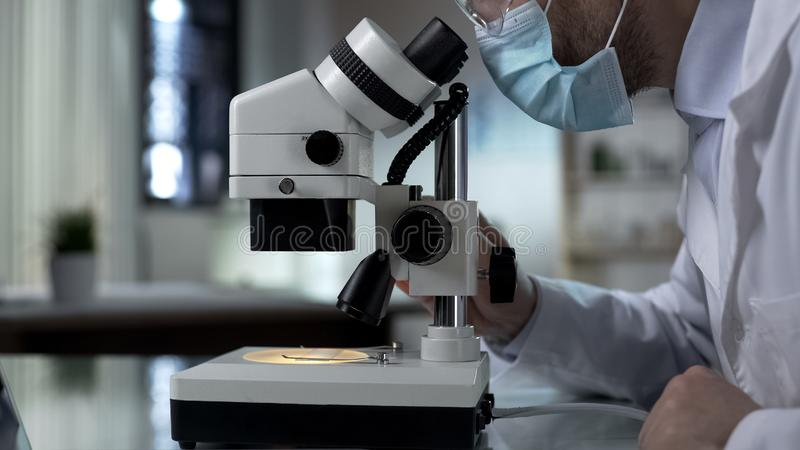 Biology student lowering microscope objective to look at sample, education royalty free stock photo