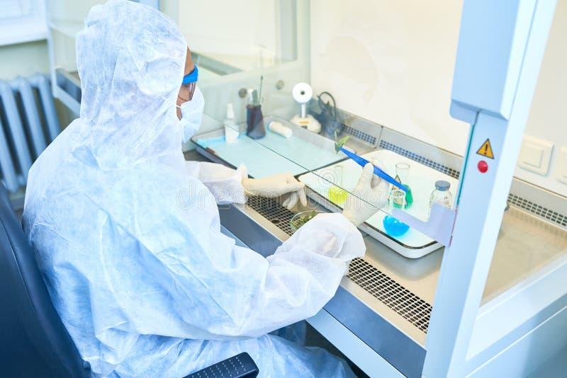 Bioloog die bladeren in chemisch onderzoek gebruiken royalty-vrije stock afbeelding