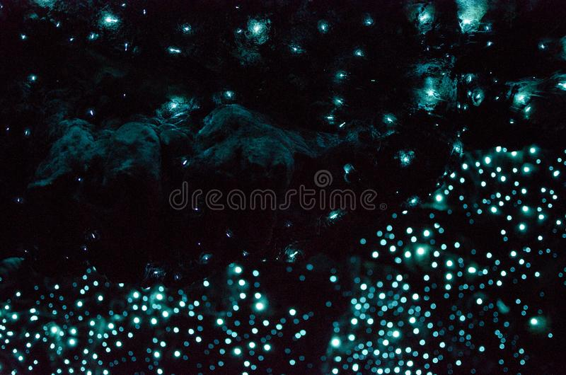 Bioluminiscent Glow Worms shining in Waipu Caves, Northland, North Island, New Zealand stock images