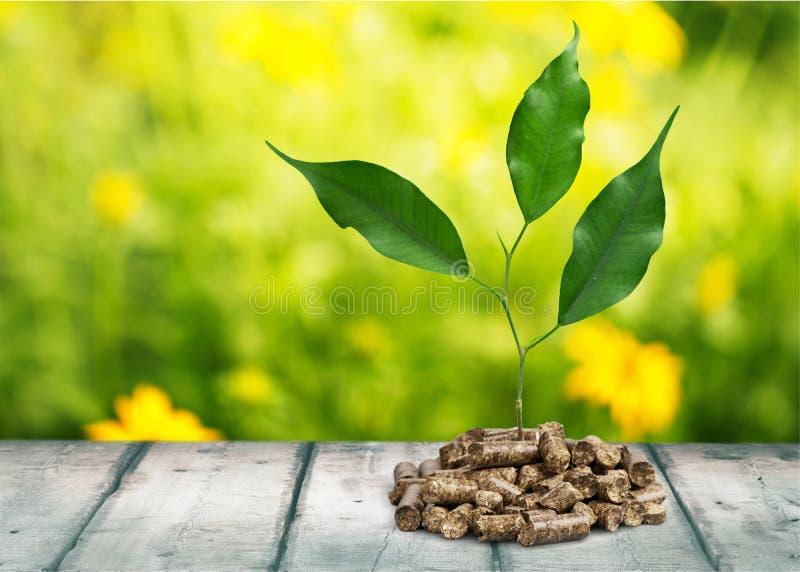 biomasa foto de archivo libre de regalías