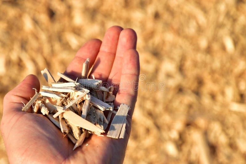 Biomasa de los pedazos de madera fotos de archivo libres de regalías