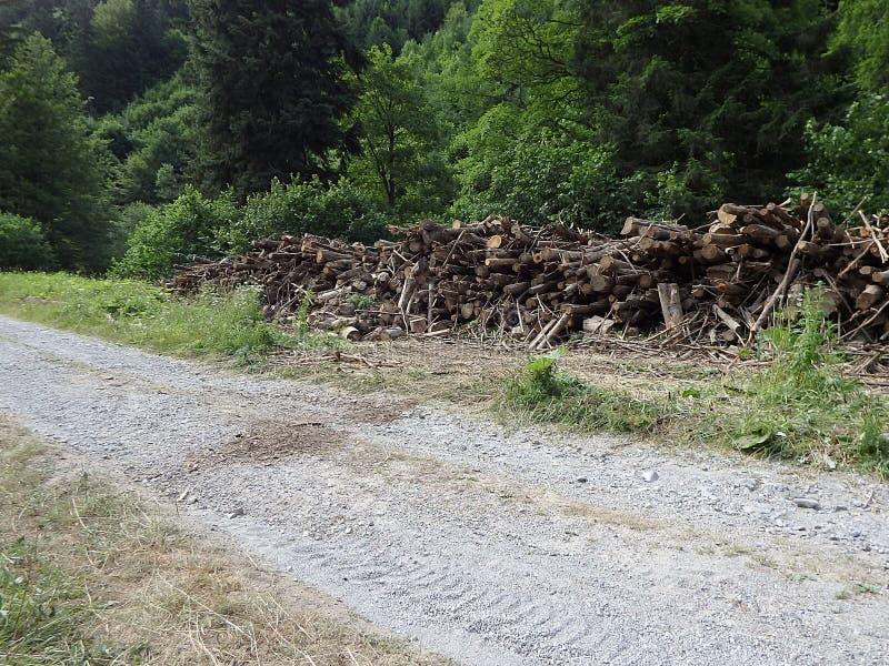 Biomasa, ramas cortadas en bosque, ramas en el bosque, madera derribada apilada para arriba fotografía de archivo libre de regalías