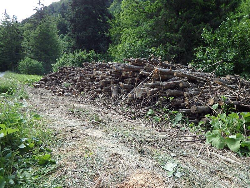 Biomasa, ramas cortadas en bosque, ramas en el bosque, madera derribada apilada para arriba imagen de archivo libre de regalías