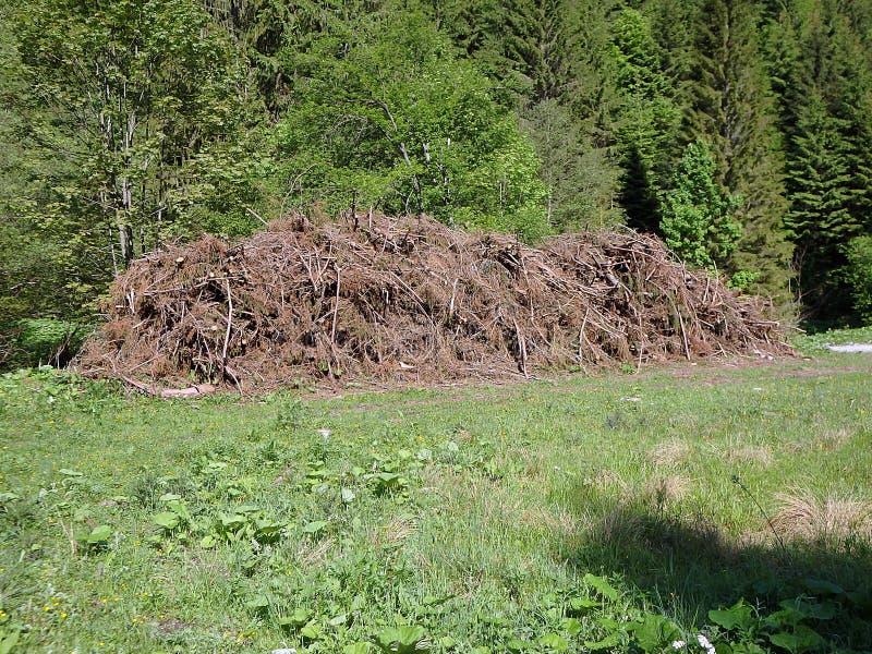 Biomasa, ramas cortadas en bosque, ramas en el bosque, madera derribada apilada para arriba imágenes de archivo libres de regalías