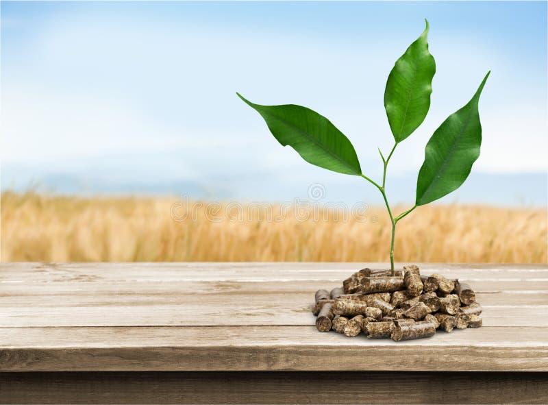 biomassa stock afbeeldingen