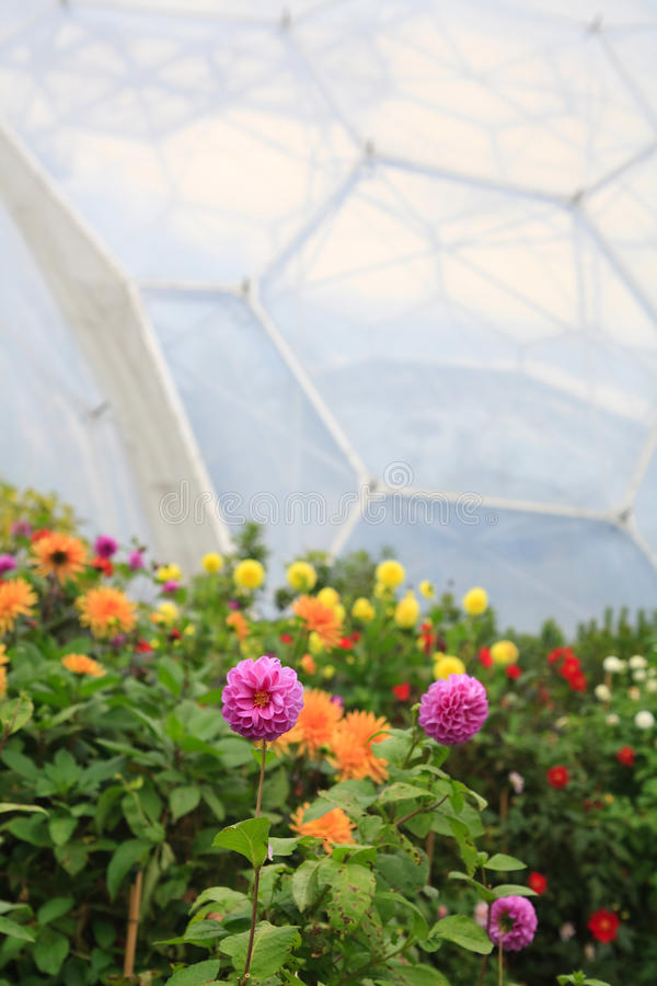 Download Biome stock image. Image of biodome, flower, assorted - 19139143