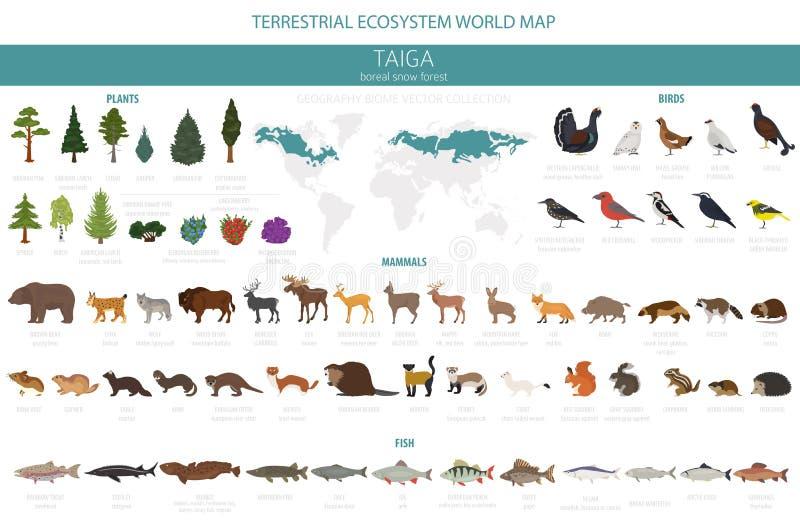 Biome Taiga, βόρειος παγκόσμιος χάρτης οικοσυστήματος χιονιού δασικός επίγειος Infographic σχέδιο ζώων, πουλιών, ψαριών και φυτών απεικόνιση αποθεμάτων