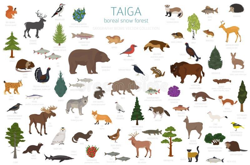 Biome Taiga, βόρειος παγκόσμιος χάρτης οικοσυστήματος χιονιού δασικός επίγειος Infographic σχέδιο ζώων, πουλιών, ψαριών και φυτών ελεύθερη απεικόνιση δικαιώματος
