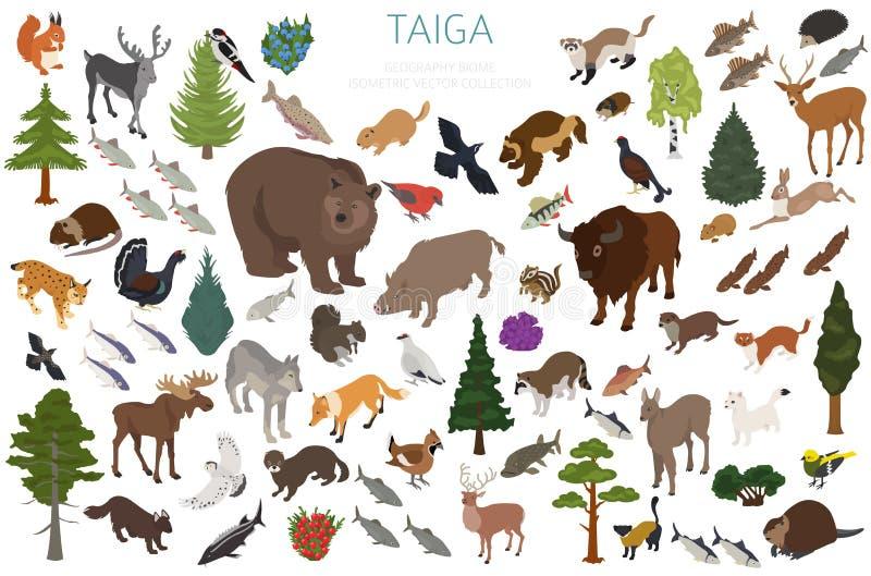 Biome Taiga, βόρειο δασικό τρισδιάστατο isometry σχέδιο χιονιού Επίγειος παγκόσμιος χάρτης οικοσυστήματος Ζώα, πουλιά, ψάρια και  διανυσματική απεικόνιση
