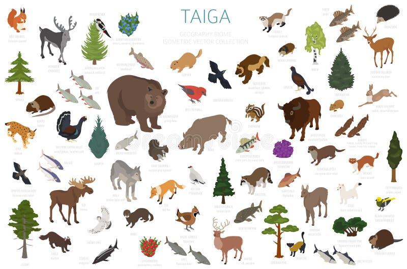 Biome Taiga, βόρειο δασικό τρισδιάστατο isometry σχέδιο χιονιού Επίγειος παγκόσμιος χάρτης οικοσυστήματος Ζώα, πουλιά, ψάρια και  ελεύθερη απεικόνιση δικαιώματος