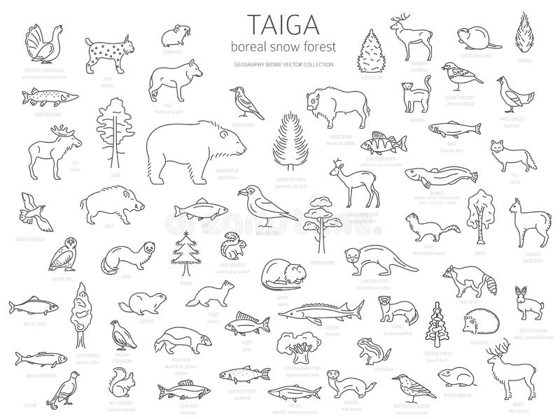 Biome Taiga, βόρειο σχέδιο γραμμών χιονιού δασικό λεπτό απλό Επίγειος παγκόσμιος χάρτης οικοσυστήματος Ζώα, πουλιά, ψάρια και φυτ διανυσματική απεικόνιση