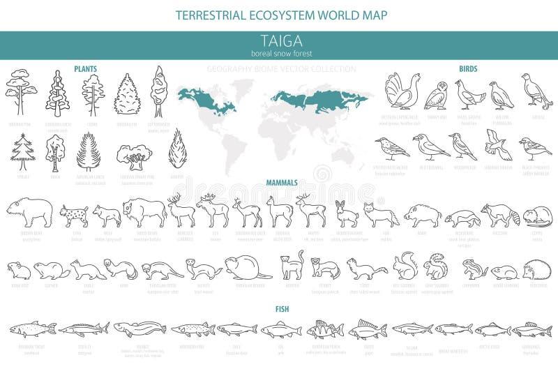 Biome Taiga, βόρειο σχέδιο γραμμών χιονιού δασικό λεπτό απλό Επίγειος παγκόσμιος χάρτης οικοσυστήματος Ζώα, πουλιά, ψάρια και φυτ ελεύθερη απεικόνιση δικαιώματος