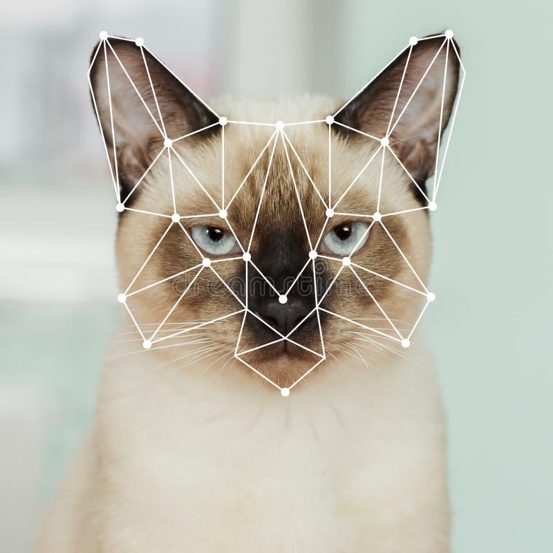 Biometric verifikation av den inhemska thai katten Framsidaerkännande royaltyfri bild
