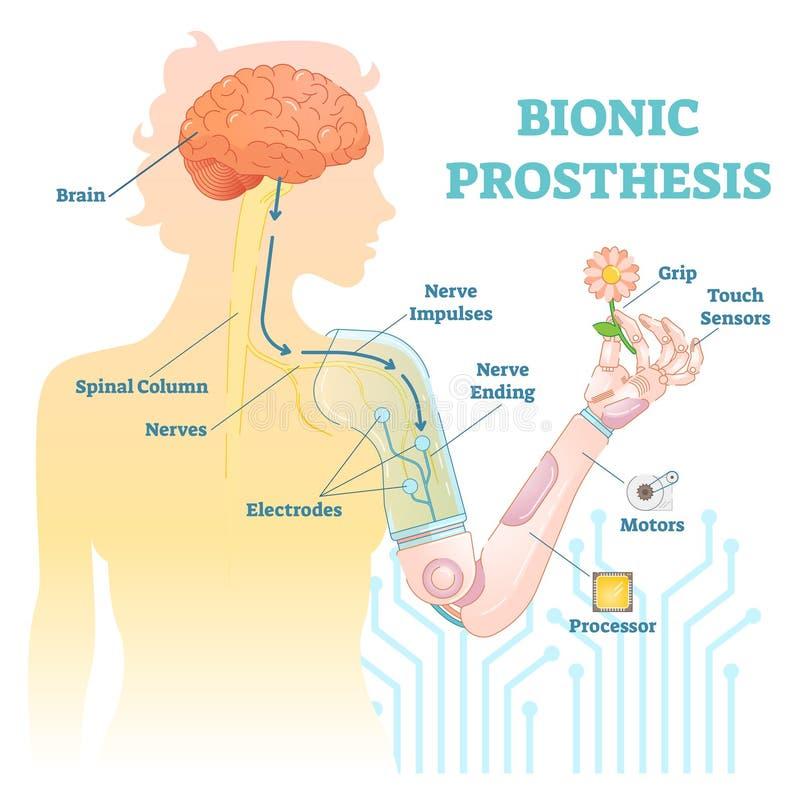 Bionic prosthesis - mechaniczna żeńska ręka ilustracja wektor