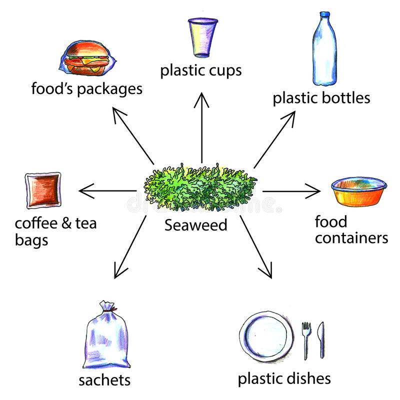Bioplastic products examples from seaweed. Seaweed replace plastic packaging. In this illustration shown a few examples of plastic products that can be make royalty free illustration