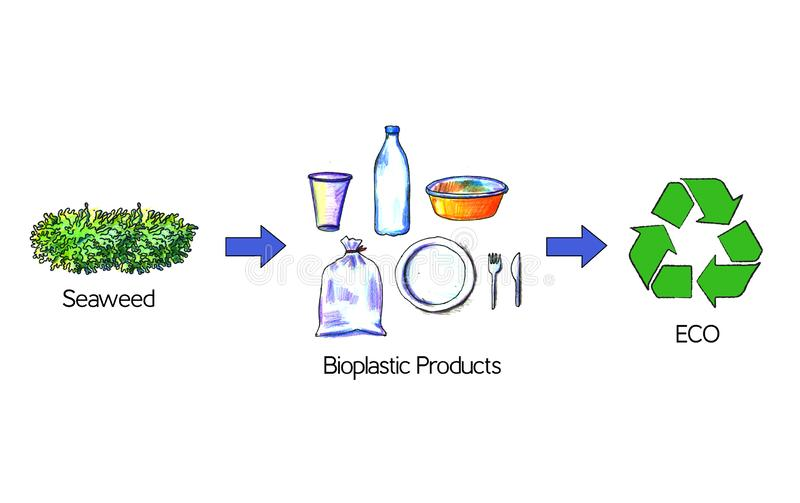 Bioplastic products from seaweed. Seaweed replace plastic packaging. Eco-friendly plastic production. In this illustration, you can see how seaweed can be used royalty free illustration