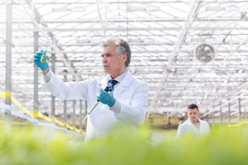 Bioquímico de sexo masculino confiado que examina el frasco cónico mientras que sostiene la pipeta en invernadero imagen de archivo
