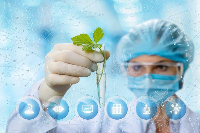 Bioquímico que mira la muestra imágenes de archivo libres de regalías