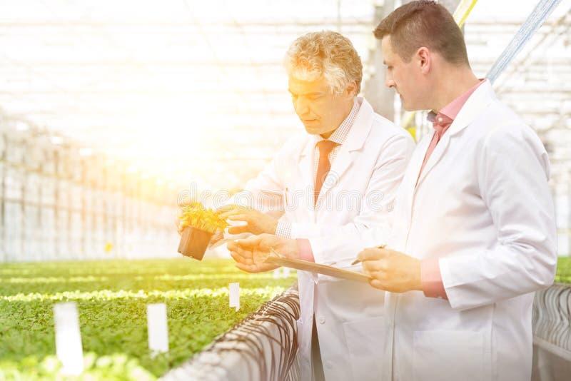 Bioquímicos machos maduros discutindo sobre as sementes em viveiros de plantas foto de stock