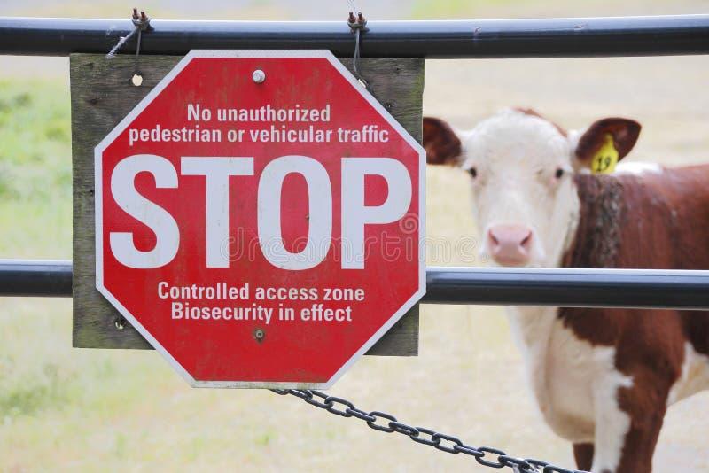 Biosicherheit oder Biosecurity und Vieh lizenzfreie stockbilder