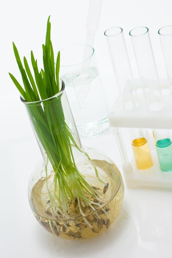 Biotechnologie stock afbeeldingen