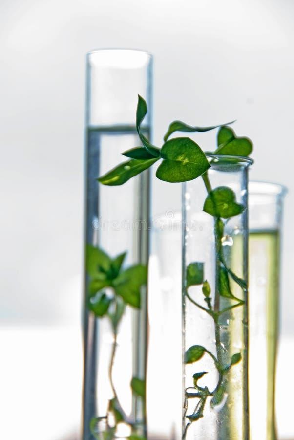 Biotechnologie - laboratoriumexperiment royalty-vrije stock foto's