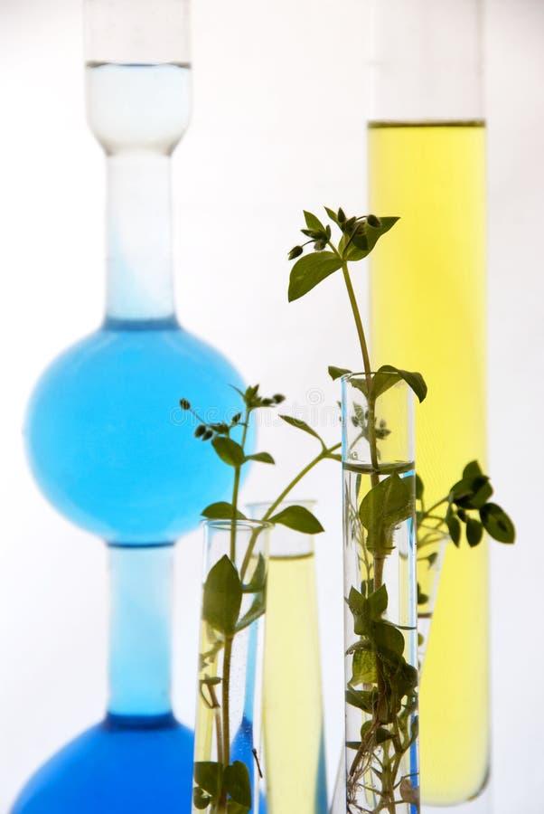 Biotechnologie - laboratoriumexperiment stock foto