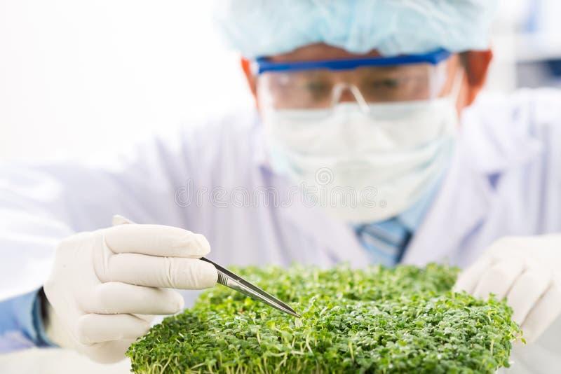 Biotechnologist concentrado en el trabajo foto de archivo libre de regalías