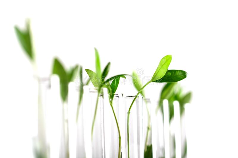 biotechnology fotos de stock