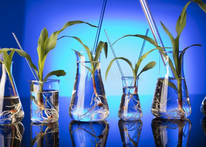 biotechnology fotos de stock royalty free