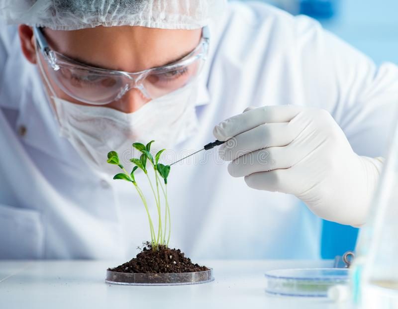 Biotechnology concept with scientist in lab. The biotechnology concept with scientist in lab royalty free stock images