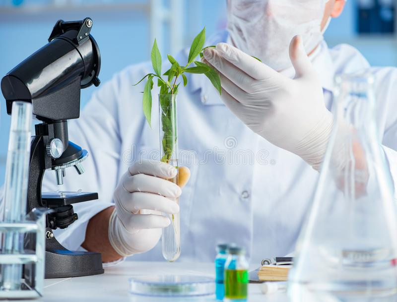 Biotechnology concept with scientist in lab. The biotechnology concept with scientist in lab stock image