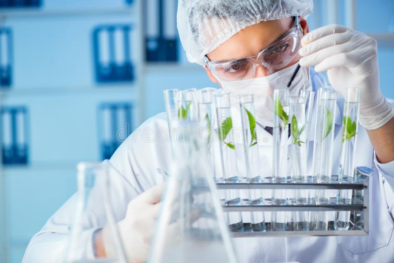The biotechnology concept with scientist in lab stock photo
