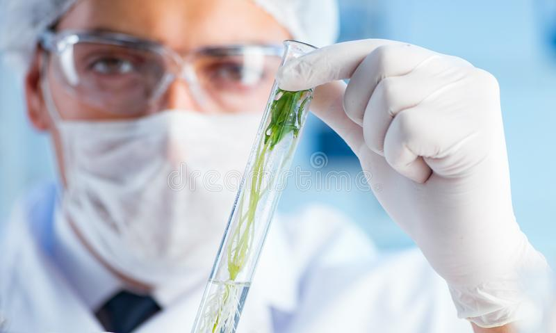 Biotechnology concept with scientist in lab. The biotechnology concept with scientist in lab royalty free stock image