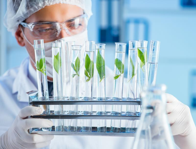 Biotechnology concept with scientist in lab stock photo