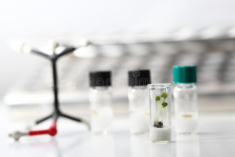 Biotechnology Experiment Royalty Free Stock Photos